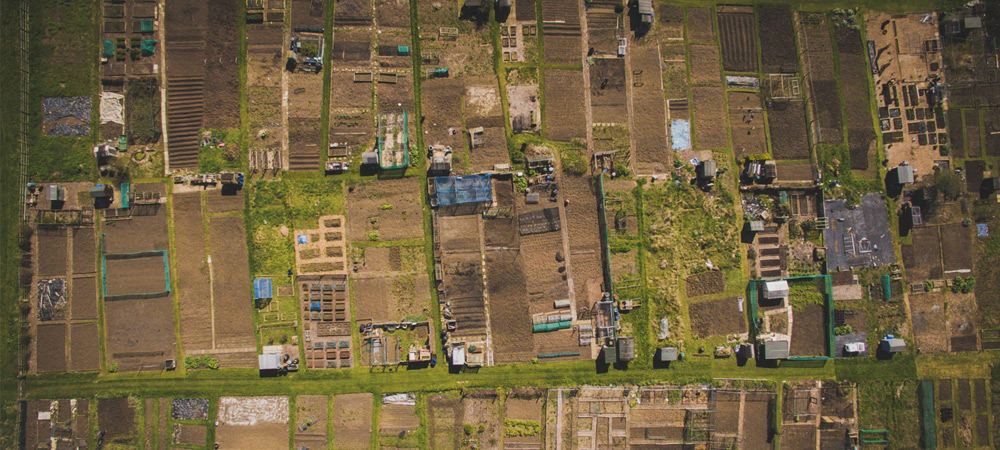 allotments view from above
