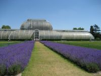 British Glasshouses - Shatteringly Good!