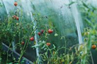 Getting to Know Your Growbag Greenhouse