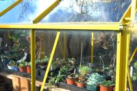 Small, Medium or Large Greenhouse?