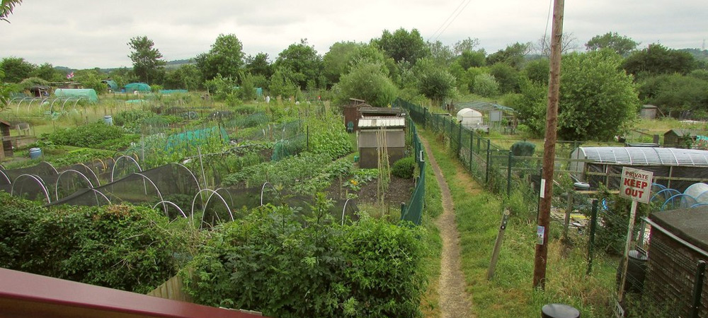 paths on allotment